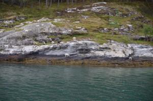 Nordkap75